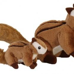 Wildlife - Chipmunk
