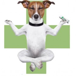 CBD Pet Care