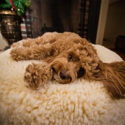HuggleFleece Pouf Bed