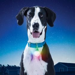 SpotLit XL Rechageable Collar Light Disc-O Select