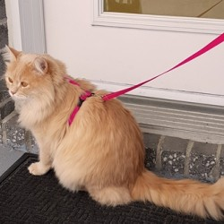 Kitty Harness - Primary Collection