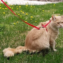 Kitty Leashes - Primary Collection