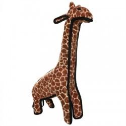 Giraffe - Girard
