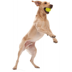JIVE Dog Ball