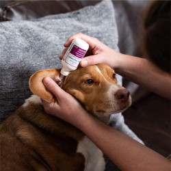 Ear Mite & Infection Treatment